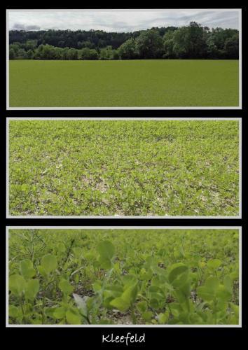 Collage 3 Bilder Kleefeld